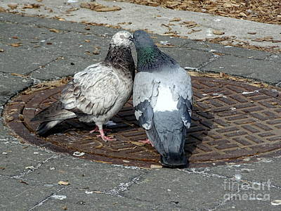 Photograph - Kissing Pigeons by Ed Weidman