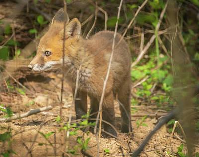 Photograph - Kit Fox Img 1 by Bruce Pritchett