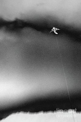 Photograph - Kite #1872 by Andrey Godyaykin