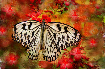Photograph - Kite Butterfly by Barbara Manis