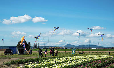 Photograph - Kites And Tulips by Tom Cochran