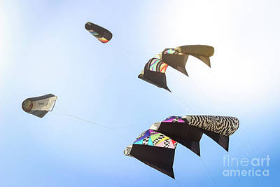 Photograph - Kites  by Colleen Kammerer