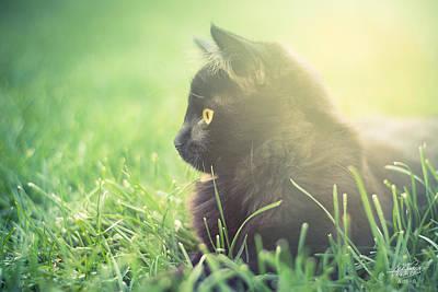 Photograph - Kitten by Adnan Bhatti