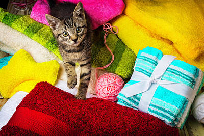 Treasure Box Photograph - Kitten Among Bath Towels by Garry Gay