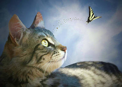Blue Swallowtail Photograph - Kitten And Butterfly, Fantasy Fusion  by Stephanie Laird