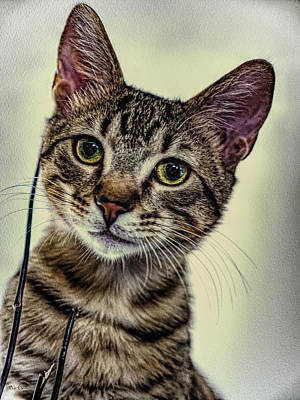 Photograph - Kitten And Sticks by Bob Orsillo