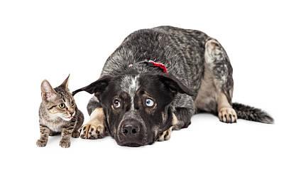 Kitten Annoying Patient Dog Art Print by Susan Schmitz