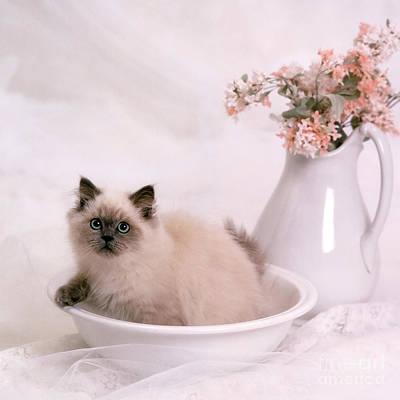 Kitten Bath Art Print by Crystal Garner