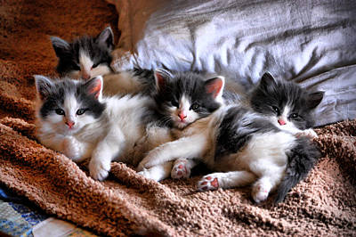 Photograph - Kitten Clan by Emily Stauring