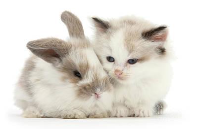 Photograph - Kitten Cute by Warren Photographic