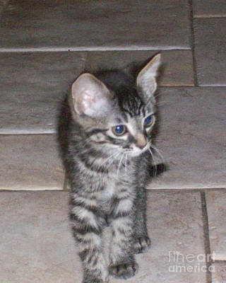Photograph - Martius Kitten by Donna L Munro