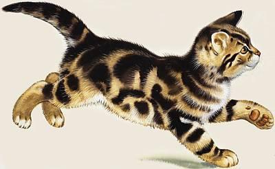 Kitten Art Print by English School