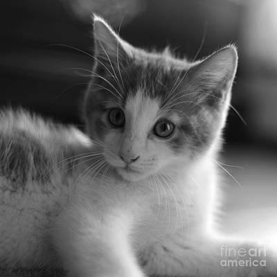 Photograph - Kitten Eyes by Joshua McCullough