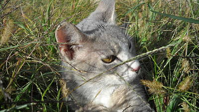 Kitten Hides Original by Pat Nalls