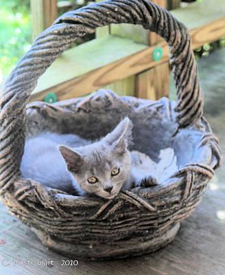 Kitten In A Basket Art Print