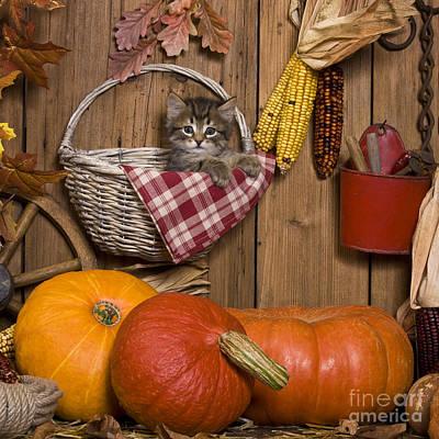 Rustic Barn Interior Photograph - Kitten In A Basket by Jean-Louis Klein & Marie-Luce Hubert