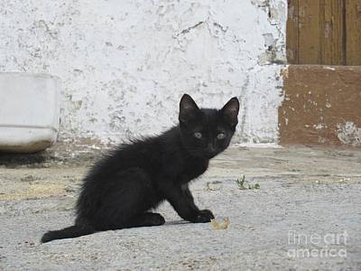 Photograph - Kitten In Iznajar by Chani Demuijlder