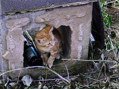 Kitten In The Junk Yard Art Print by Larry Capra