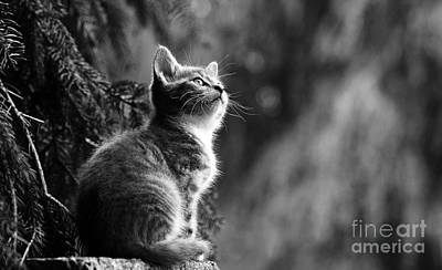 Photograph - Kitten In The Tree by Jesse Watrous