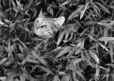 Photograph - Kitten In The Weeds 2 by Patrick M Lynch