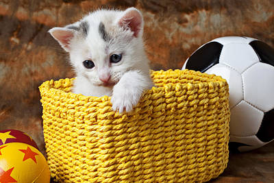 Kitten In Yellow Basket Print by Garry Gay