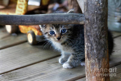 Photograph - Kitten by Jill Lang