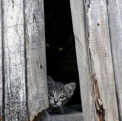 Photograph - Kitten by Mario Marsilio