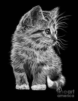 Drawing - Kitten by Murphy Elliott