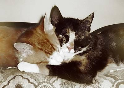 Photograph - Kitten Nap by JAMART Photography