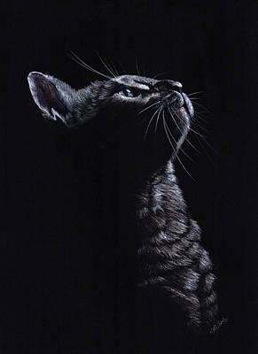 Drawing - Kitten On Black by Kathie Miller