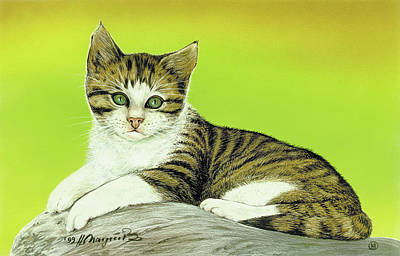 Painting - Kitten On Rock by Johannes Margreiter