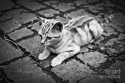 Photograph - Kitten by Patrick M Lynch