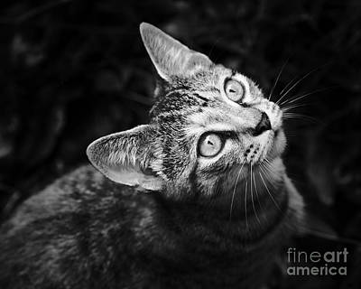 Photograph - Kitten Pepper by Patrick M Lynch