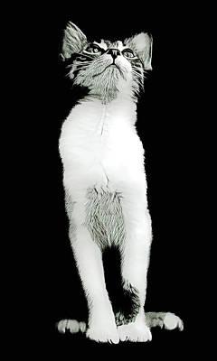 Wall Art - Digital Art - Kitten Queen by David G Paul