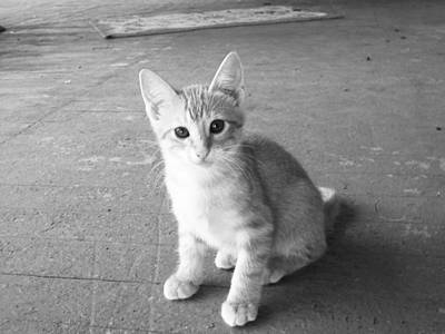Photograph - Kitten by Robin Lewis