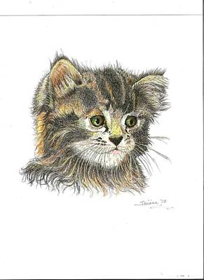 Drawing - Kitten by Bill Hubbard