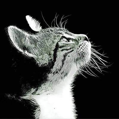 Wall Art - Digital Art - Kitten Thoughts by David G Paul