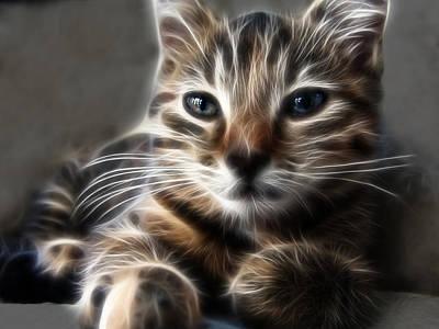 Kitten Art Print by Tilly Williams