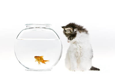 Fish Bowl Photograph - Kitten Watching A Goldfish by Jean-Louis Klein & Marie-Luce Hubert