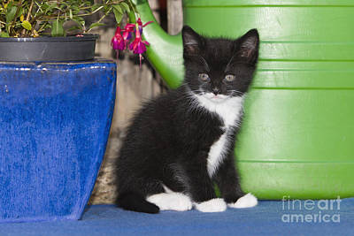 Photograph - Kitten With Plant by Duncan Usher