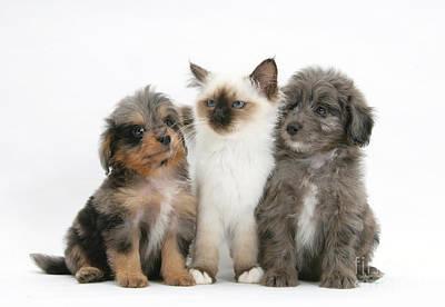 Kitten With Puppies Art Print