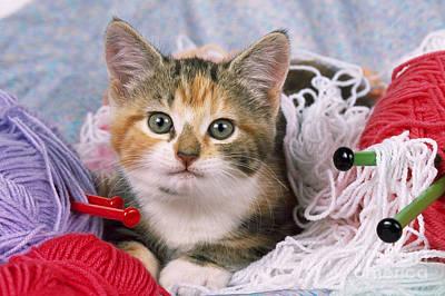 Kitten With Yarn Art Print by John Daniels
