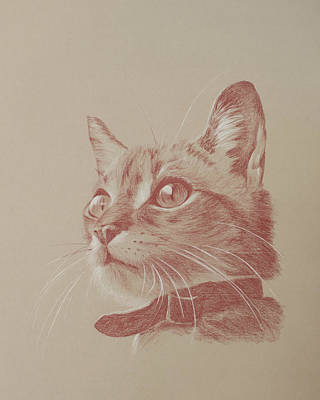 Drawing - Kitten Wonder by Wendy Booth