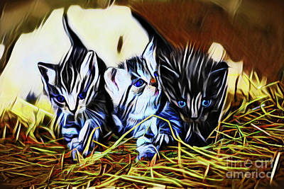 Photograph - Kittens 20218 by Ray Shrewsberry
