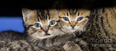 Kittens In The Shadow Art Print
