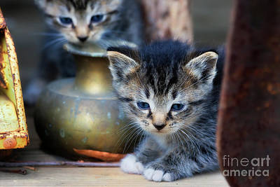 Photograph - Kittens by Jill Lang