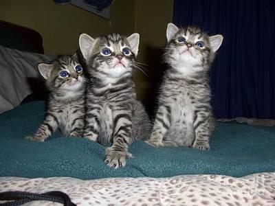 Photograph - Kittens  by Joyce Woodhouse