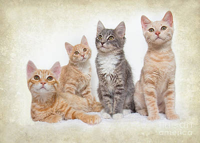 Landscapes Photograph - Kittens by Mimi Ditchie