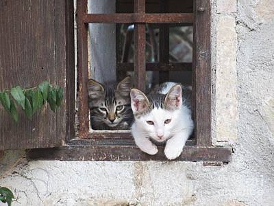 Photograph - Kittens In Zuheros by Chani Demuijlder