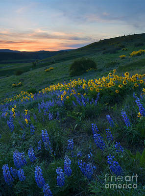 Kittitas Wildflower Sunset Art Print